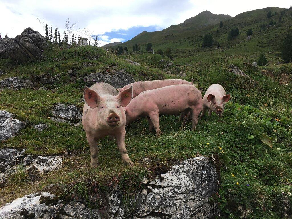 07.08.2018 Schweinereien am Wegesrand