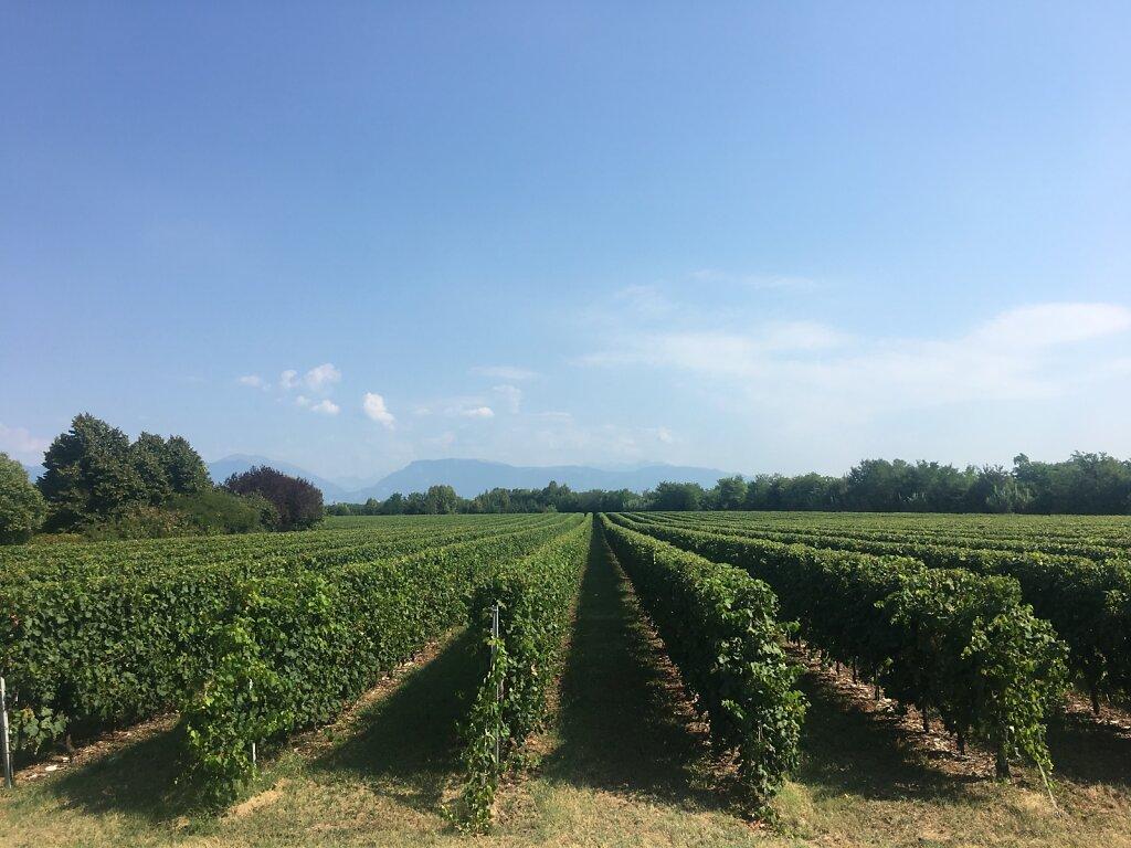21.08.2018 Wein